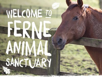 Welcome To Ferne Animal Sanctuary