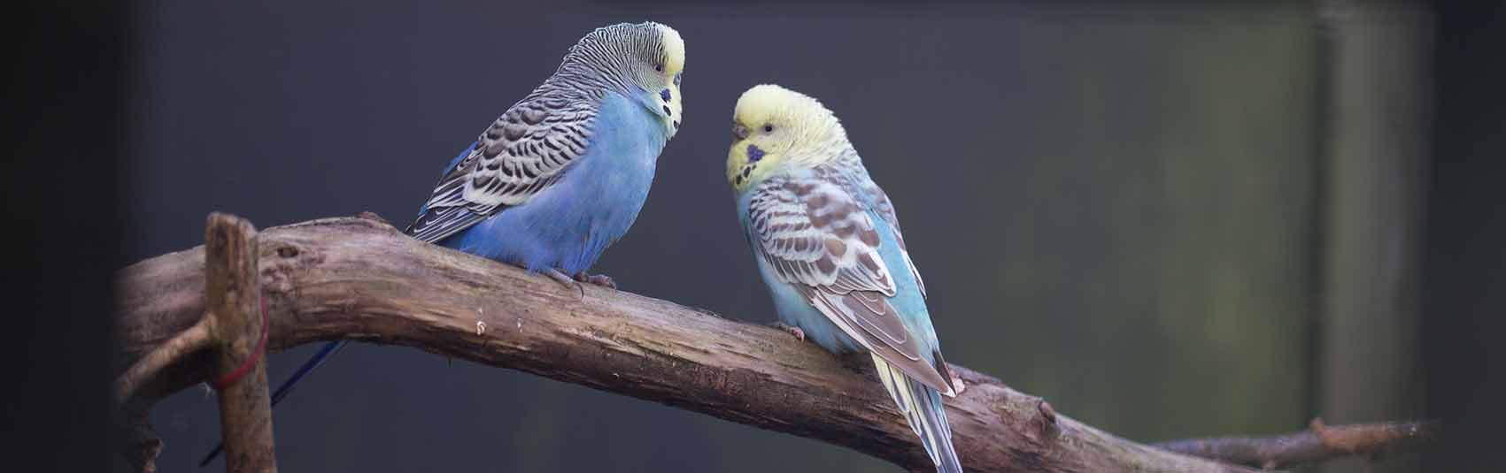 Parakeets at Ferne Animal Sanctuary