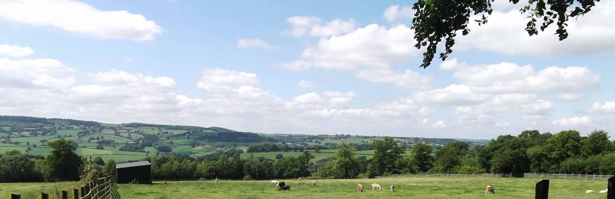 Ferne Animal Sanctuary countryside view