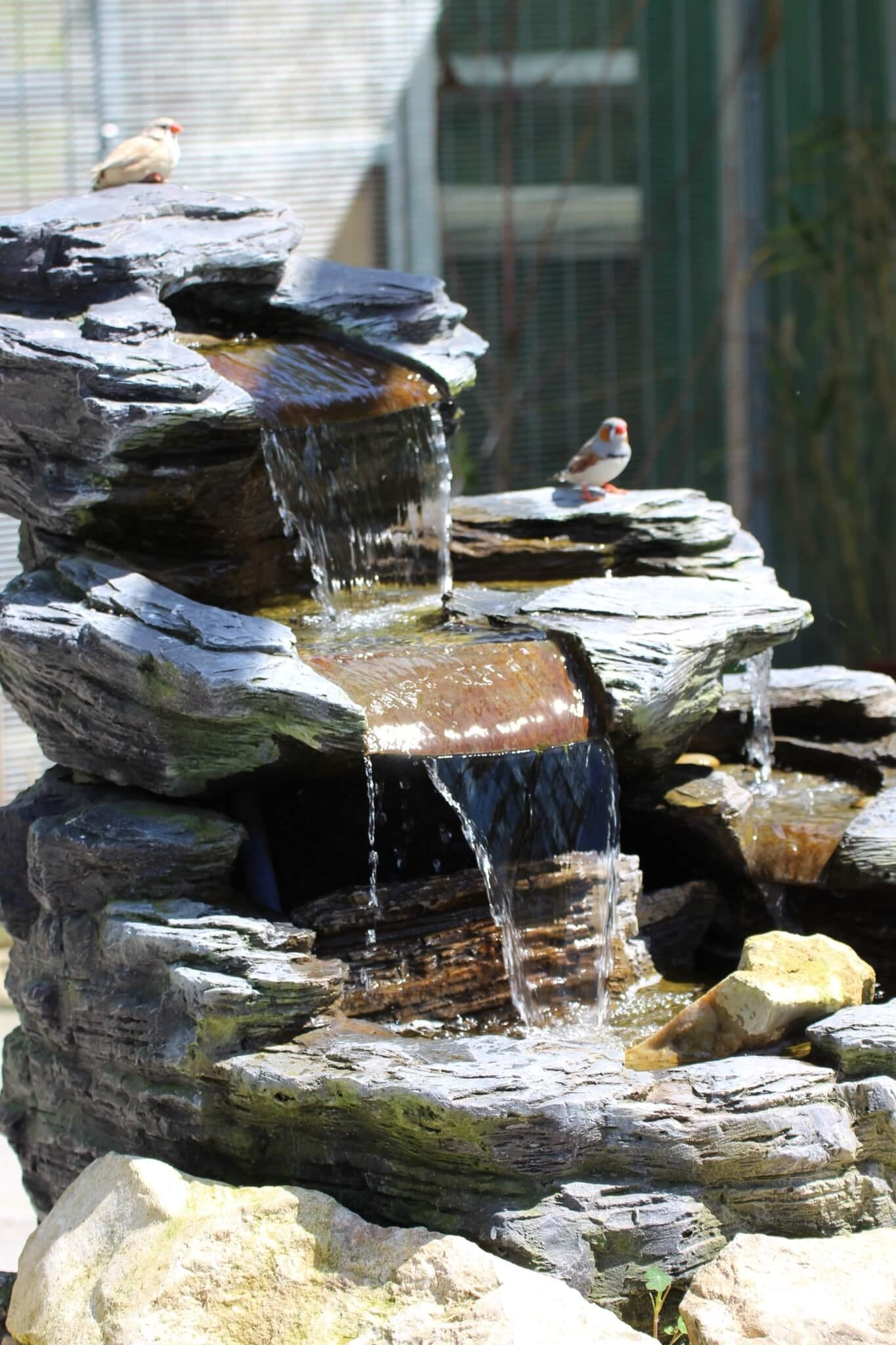 Ferne Animal Sanctuary Zebra finches on a fountain