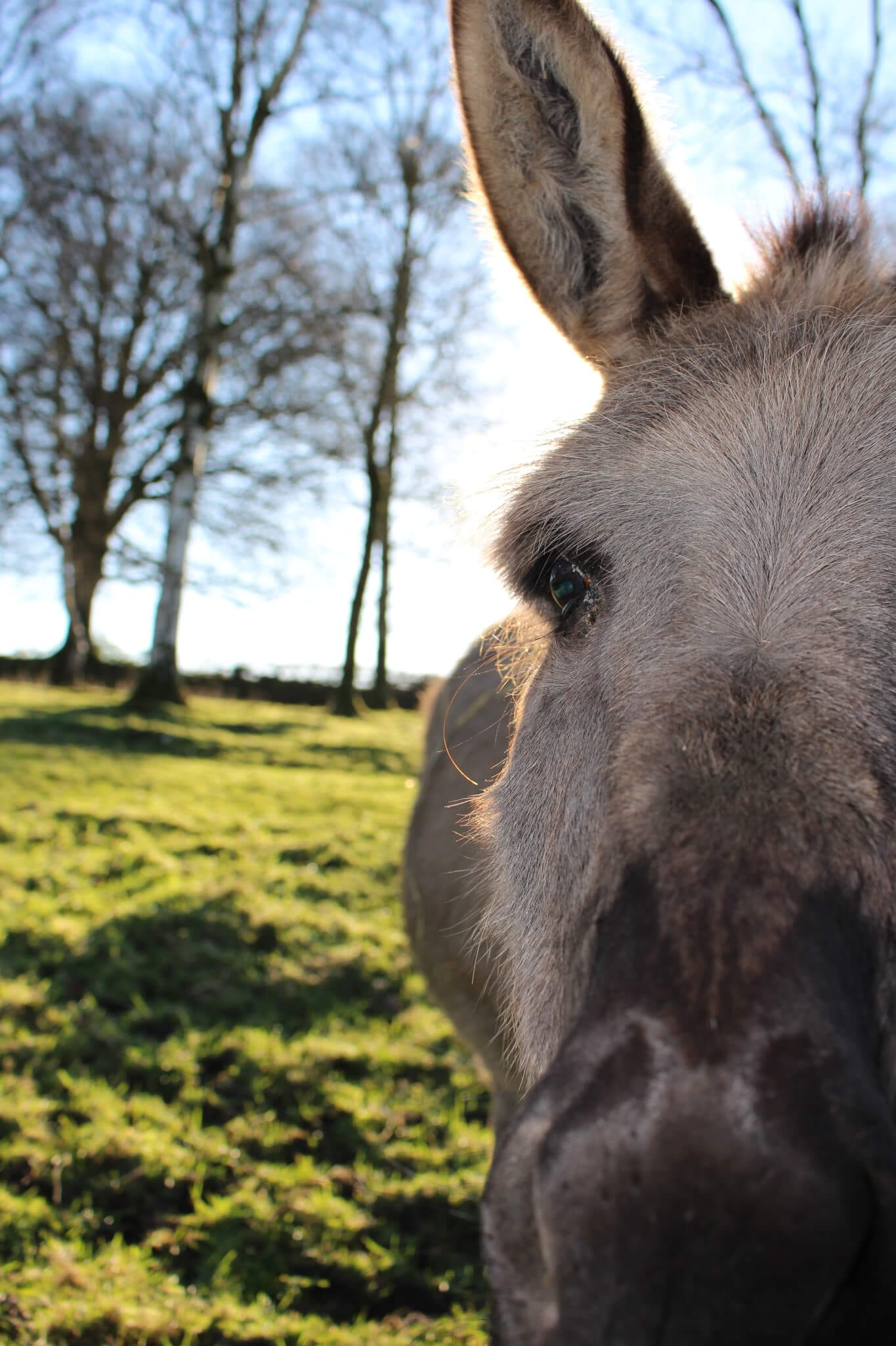 Ferne Animal Sanctuary donkey close-up