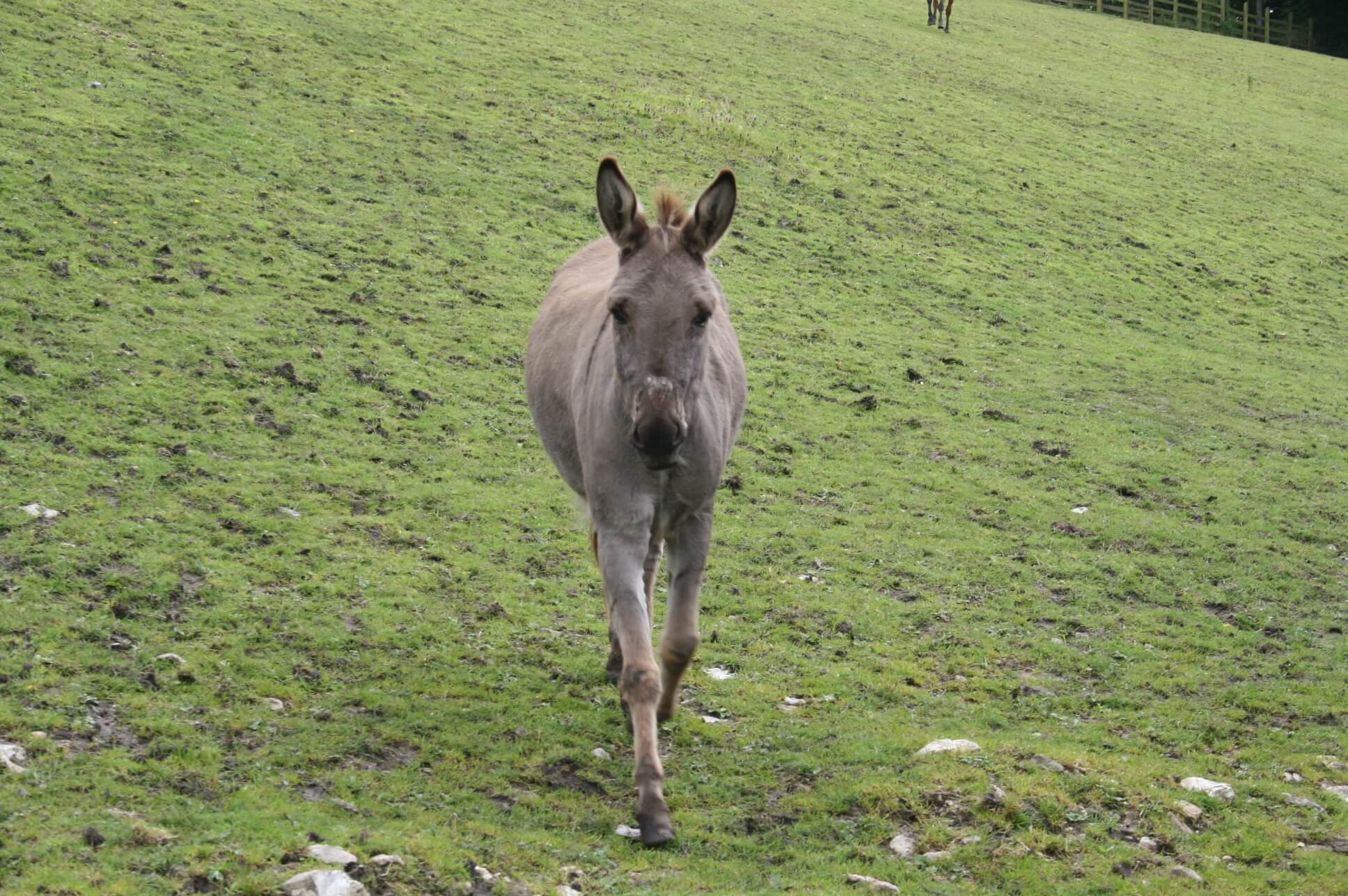 Ferne Animal Sanctuary little donkey