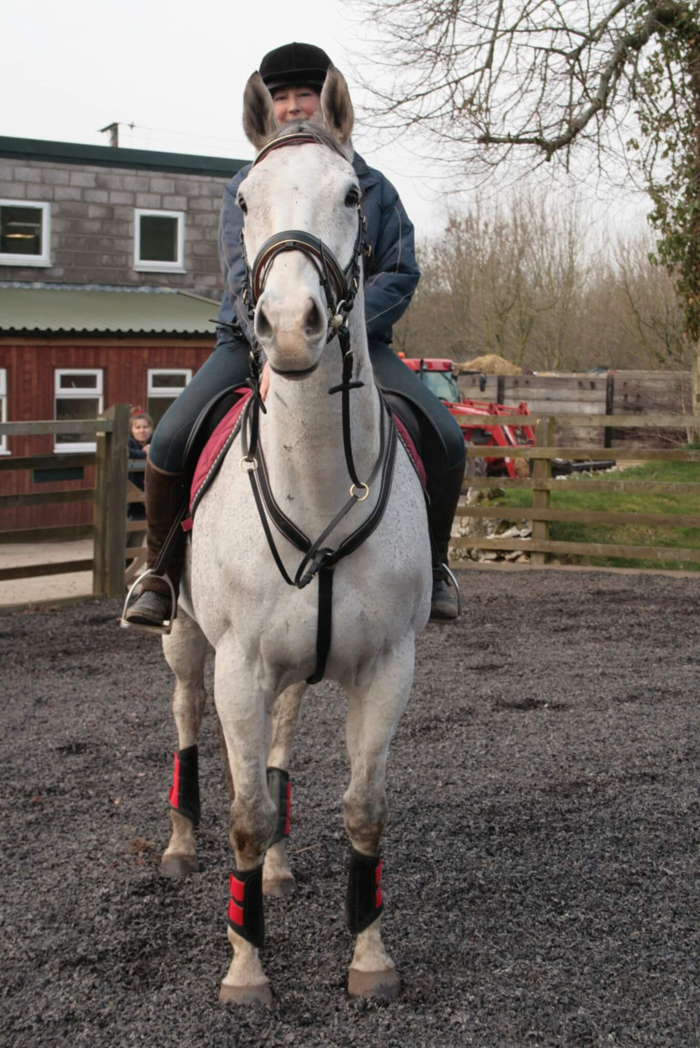 Ferne Animal Sanctuary Horse named the legend of boris