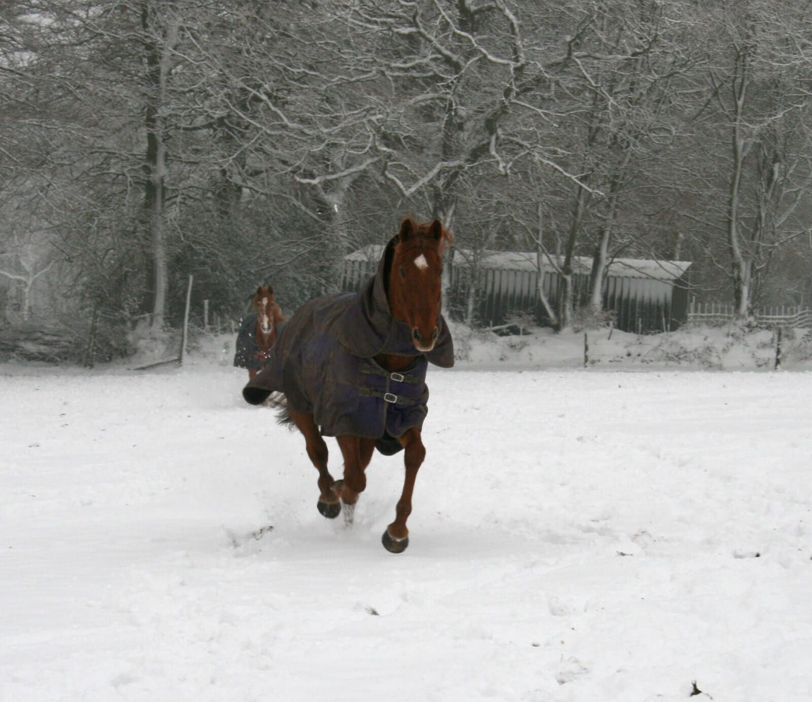 Ferne Animal Sanctuary horse galloping in the snow