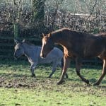 Ferne Animal Sanctuary horse and donkey in field