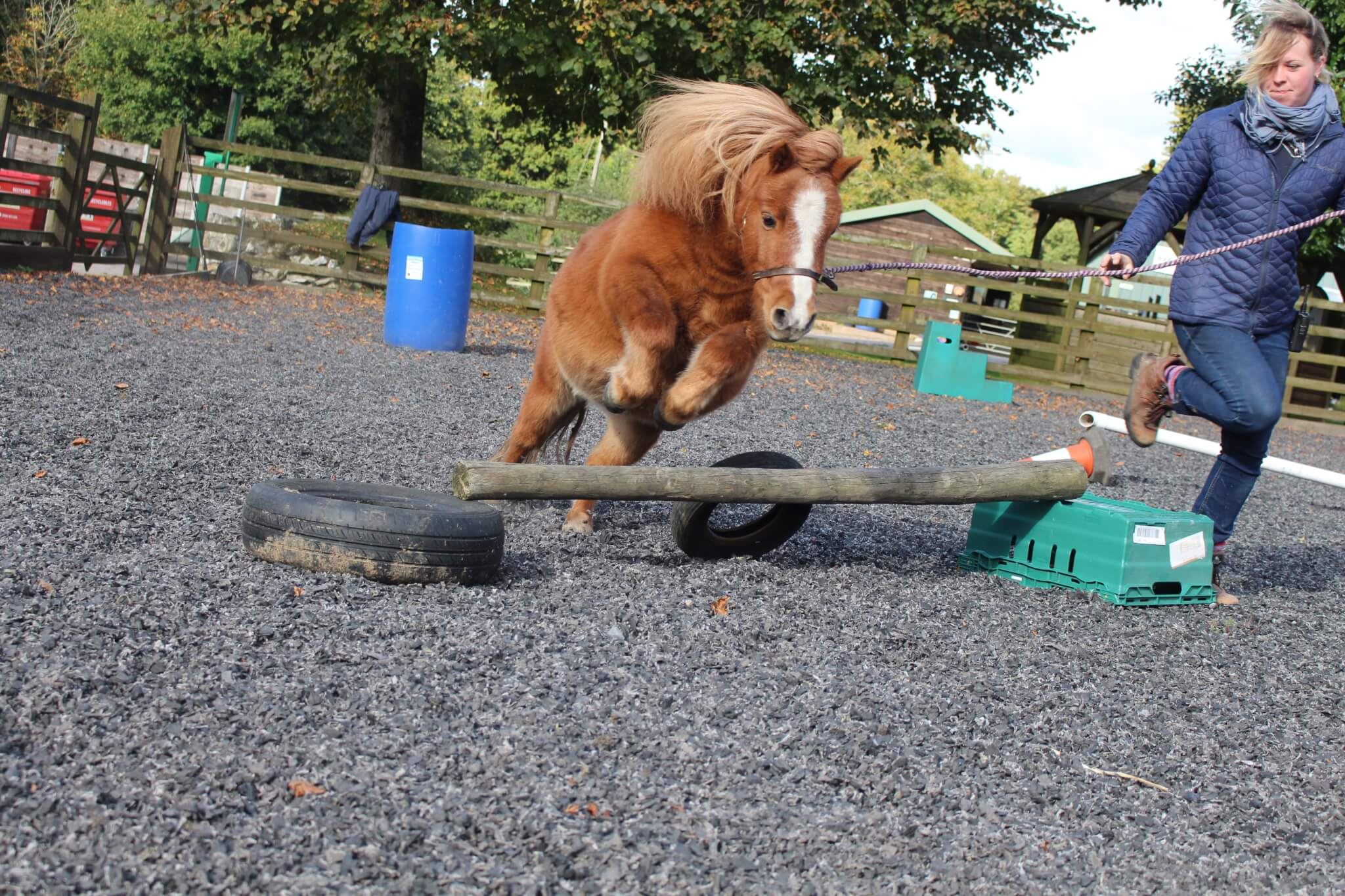 Ferne Animal Sanctuary pony jumping