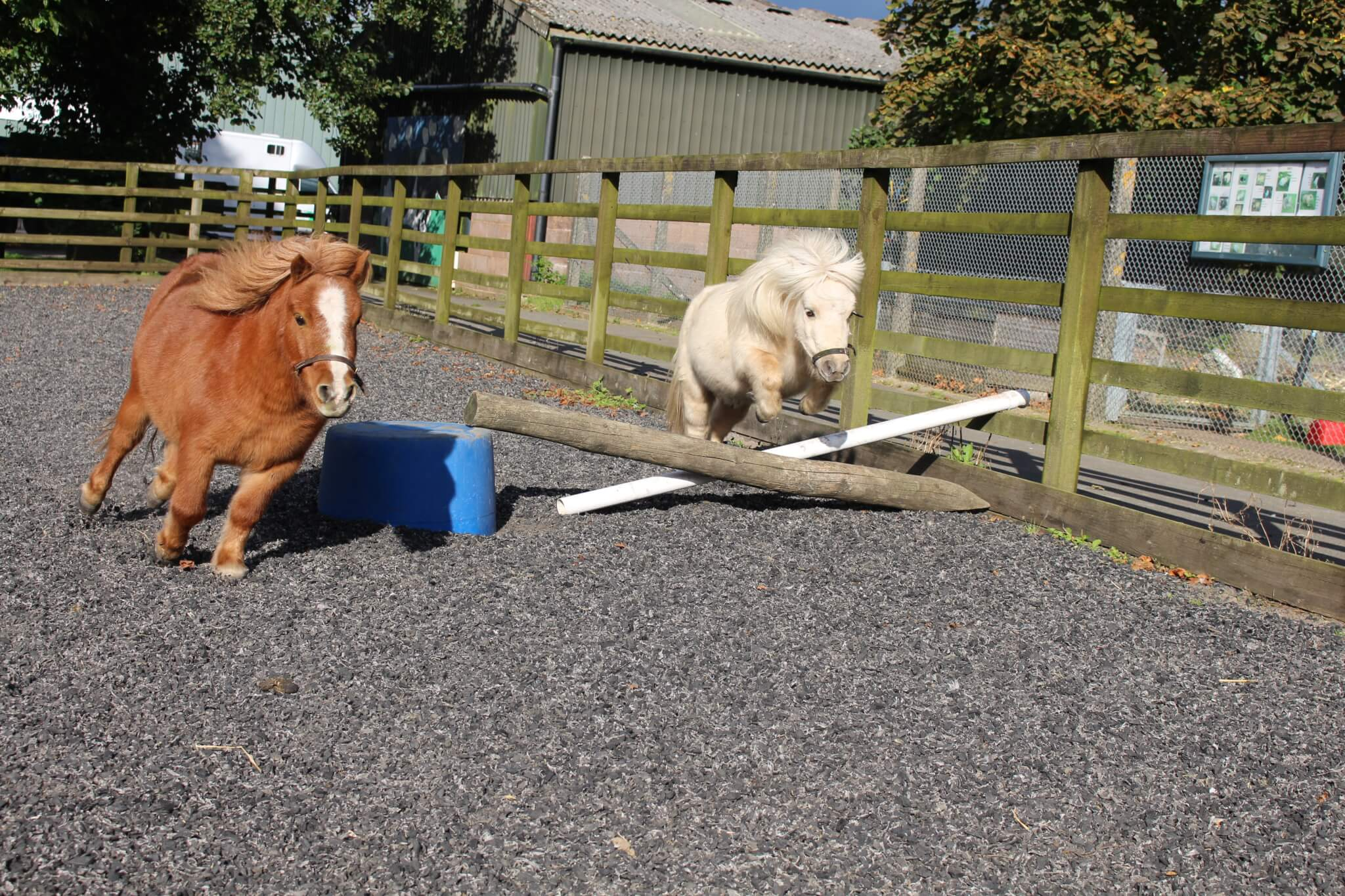 Ferne Animal Sanctuary Ponies Jumping