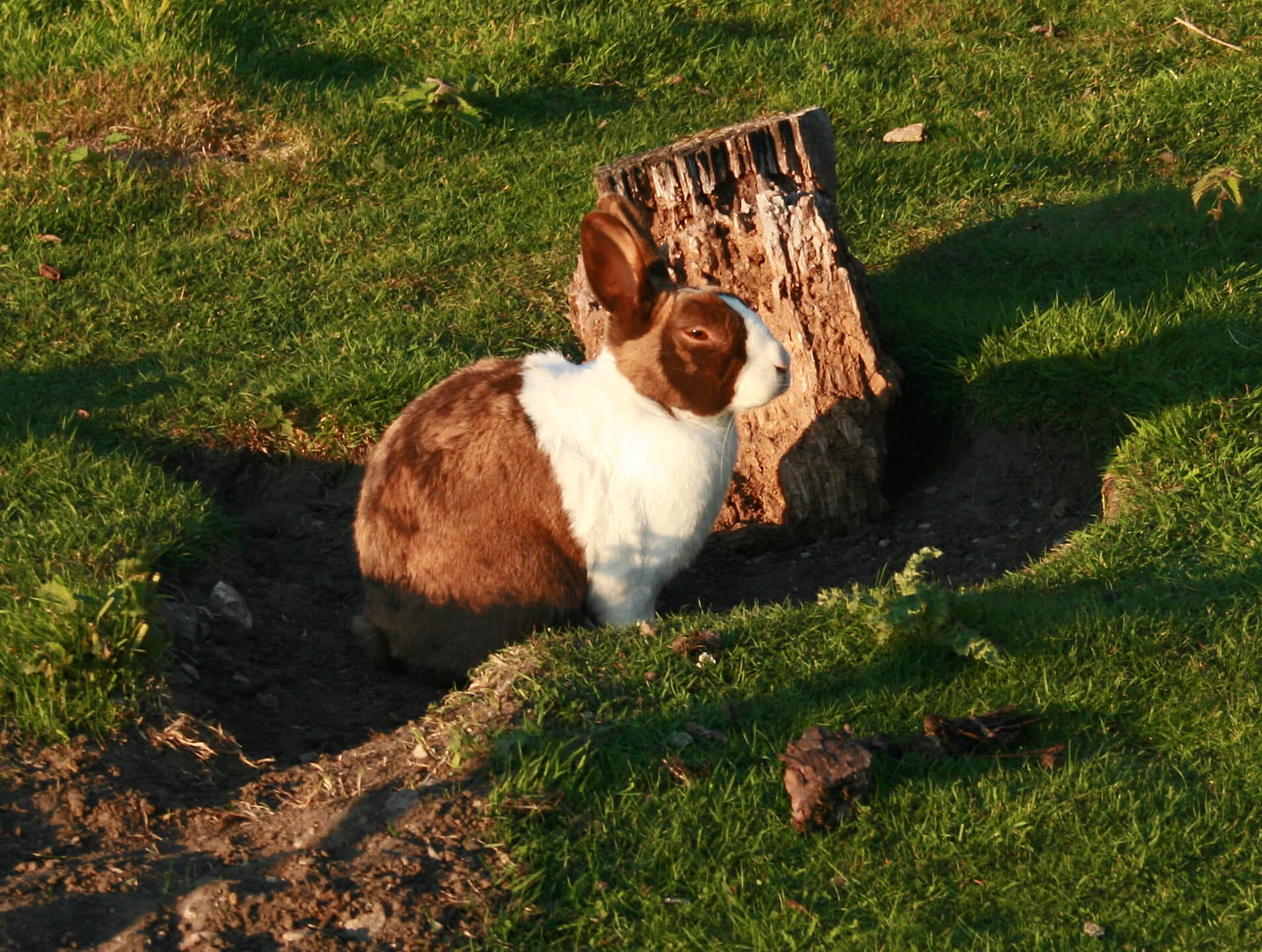 Ferne Animal Sanctuary Rabbit by a tree stump