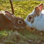 Ferne Animal Sanctuary Pair of rabbits nuzzling