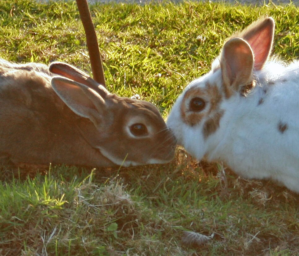 Ferne Animal Sanctuary Pair of rabbits nuzzling