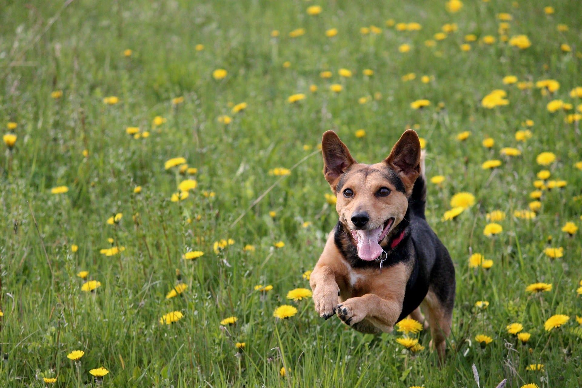 Ferne's Sponsored Dog Walk