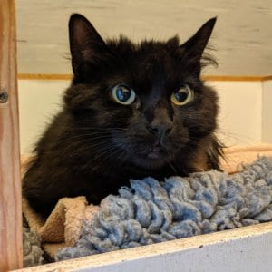 Ferne Animal Sanctuary | Animal categories cats